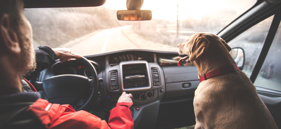 Man driving with dog in the front passenger seat